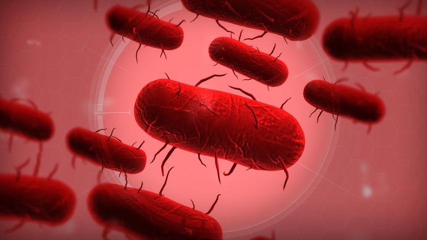 Из-за эболы продажи Plague Inc выросли