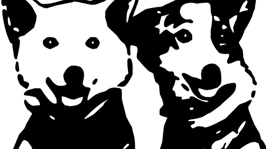 White Nights 2015 - доклад Jetdogs